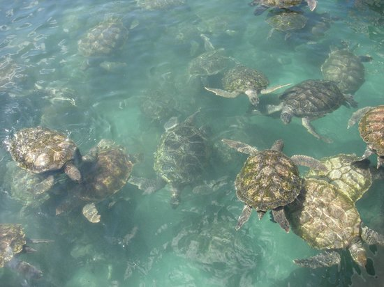 Discovery Point Club: FAMOUS TURTLE FARM 5 MINUTES AWAY