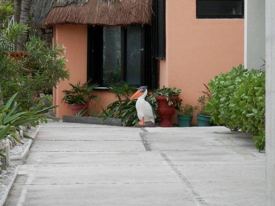Hotel Villa Kiin:                   Hotel grounds
