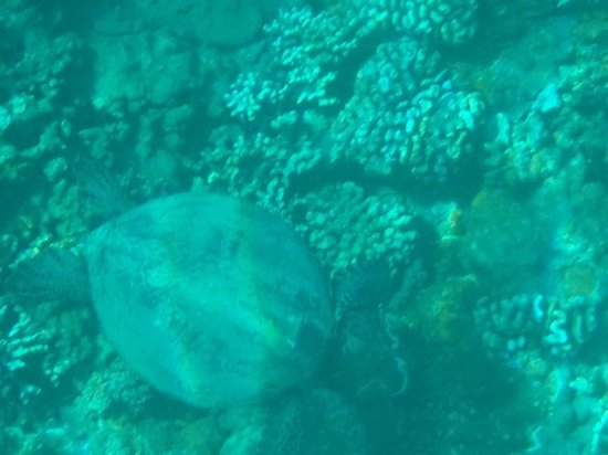Maui Snorkel Tours:                                     alien landscape