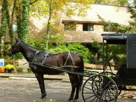 The Inn at Honey Run: Buggy Rides through Amish Country