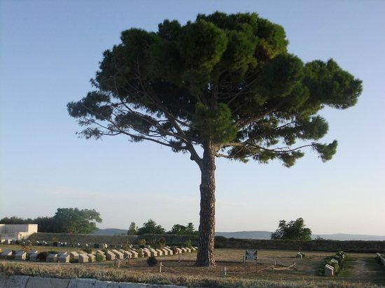 Lone Pine Cemetery - Picture of Gallipoli National Park ...