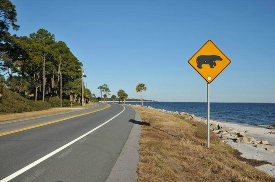 The Old Carrabelle Hotel: The start of Carrabelle beach - the bears like it too
