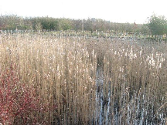 Days Inn Peterborough: Pond behind hotel