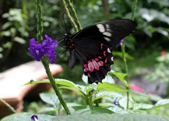 Los Lagos Hotel Spa & Resort:                   butterfly