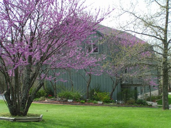 Red Bud Cove Bed and Breakfast Suites: Beautiful Grounds