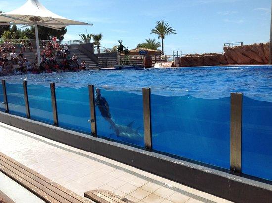 Marineland Majorca