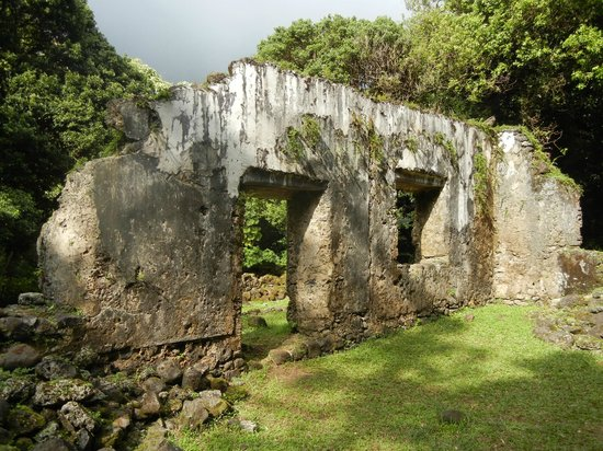Aloha Private Tours: King and Quieens castle ruins in bamboo forest