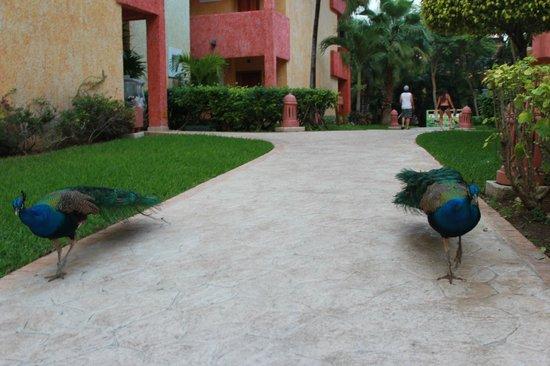 Iberostar Tucan Hotel:                                     le site
