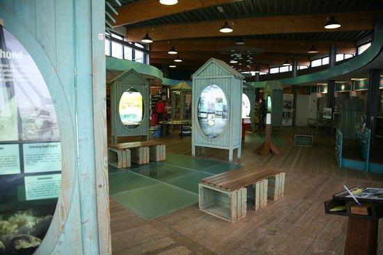 Zeehondencentrum Pieterburen:                   Het informatiecentrum