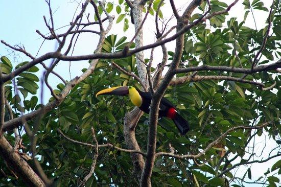Hotel Costa Verde:                   toucan
