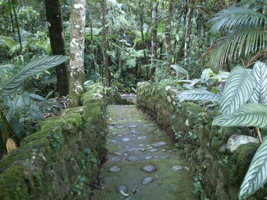 Pousada Terra do Amor :                   Acesso a piscina de águas naturais