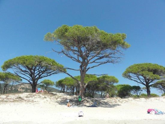 Plage de Palombaggia : Wonderful beach