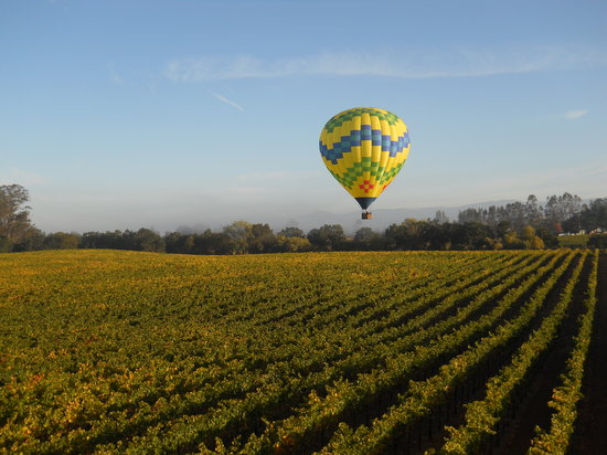 Up & Away Ballooning: Sonoma County morning.