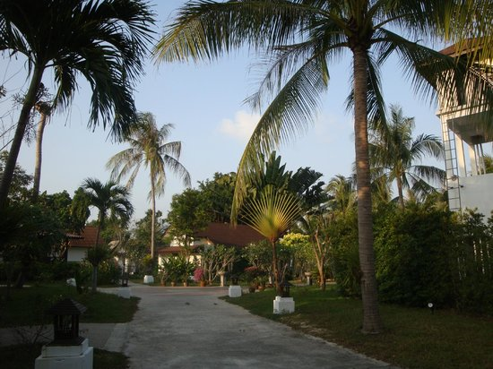 Coco Palm Beach Resort: jardin