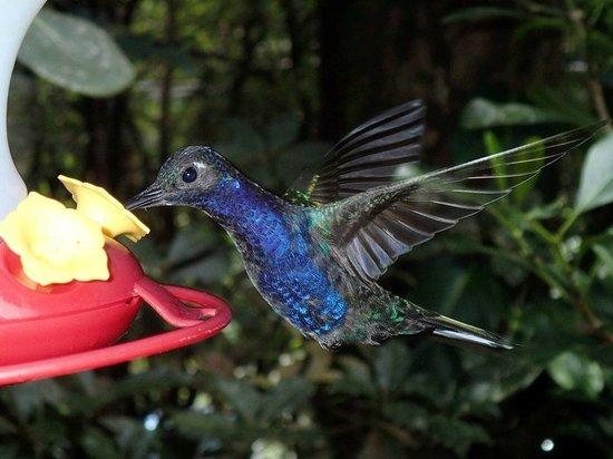 types of hummingbirds in virginia hummingbird gallery monteverde costa rica top tips before you