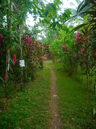 Hammock Bridge Backpackers Eco Resort:                   Pathway along to our cabin