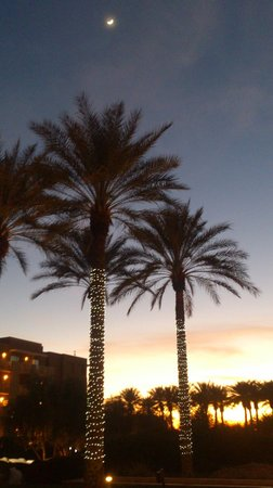 JW Marriott Desert Ridge Resort & Spa Phoenix: Palm trees just outside of the entrance