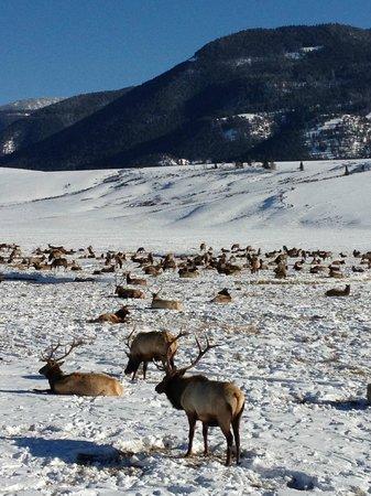 National Elk Refuge: Elk Refuge