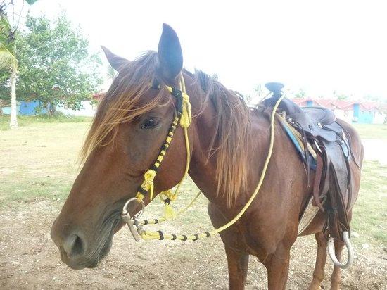 Islazul Villa Don Lino:                   horse riding paradise, free daily! 2013