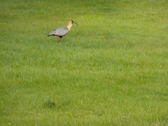 كاو ياتون هوتل دي كامبو: Birds on the wonderful grounds around Kau Yatun