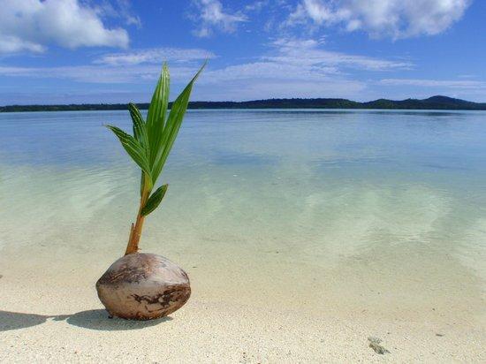Aitutaki Lagoon Resort & Spa:                   Aitutaki Lagoon