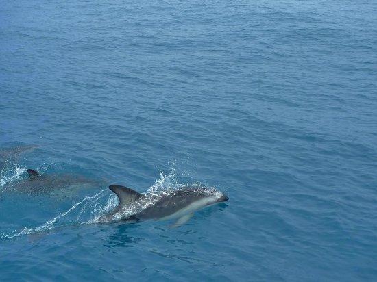 Kaikoura Fishing Tours: Dolphin