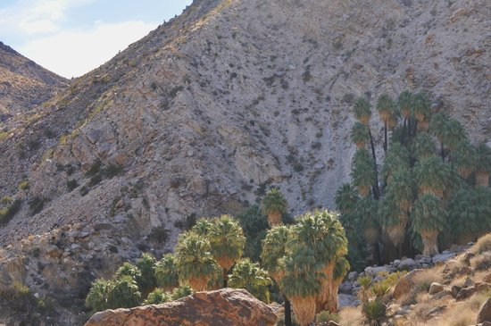 Fortynine Palms Oasis Trail : View of the Oasis