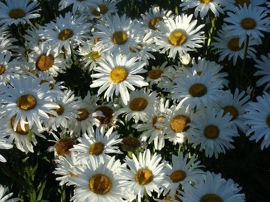 Hosteria del Prado:                   Flores por doquier