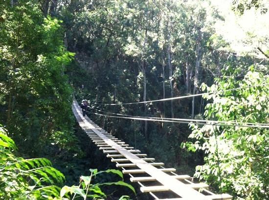 Big Island Eco Adventures II Zipline Canopy Tour:                   the bridge!! a lot easier than I thought!