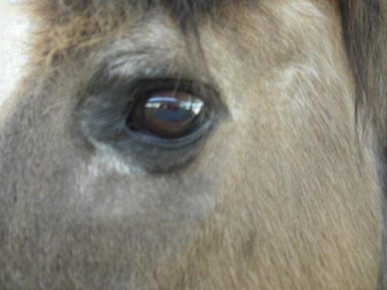 The Gentle Barn:                   The horse is watching you