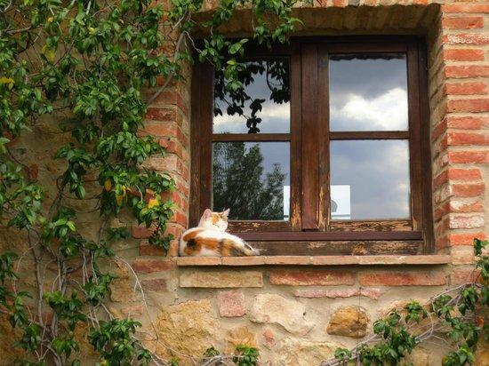 Agriturismo La Falconara:                                     one of the friendly cats