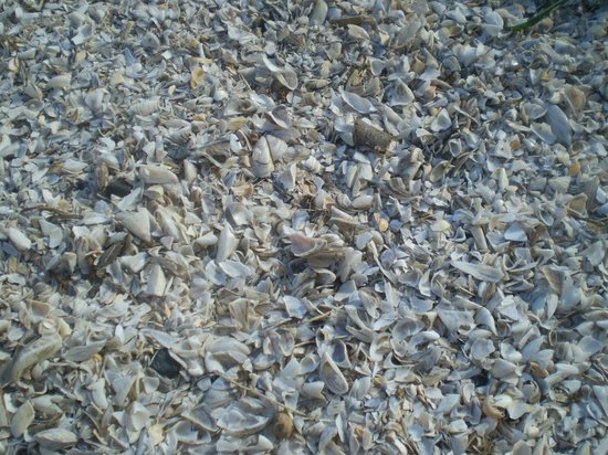 High Cliff State Park:                   Shell covered beach