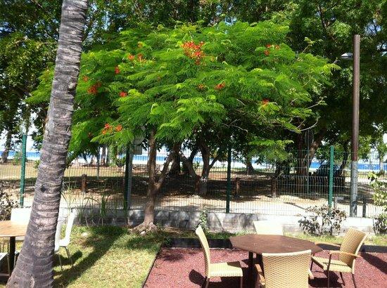 Hotel Le Recif:                   un flamboyant dans le parc