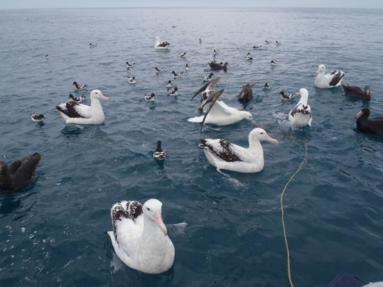 Albatross Encounter 사진