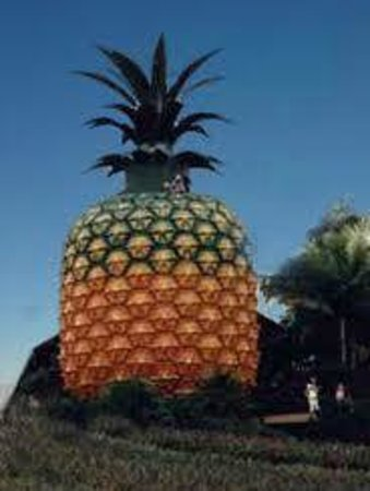 Magical Mystery Tours- Day Tours: The Big Pineapple, Sunshine Coast