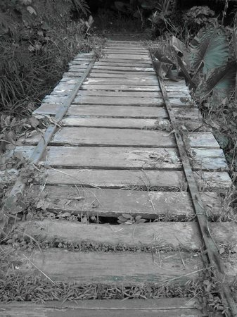 Palawan Wildlife Rescue and Conservation Center:                   Watch Your Step