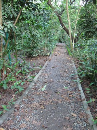 Palawan Wildlife Rescue and Conservation Center:                   Path through the woods