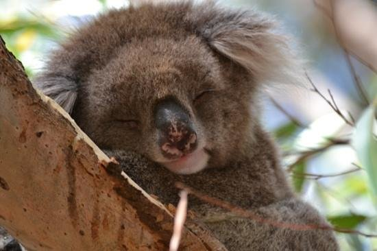 Hanson Bay Wildlife Sanctuary:                   sleeping cutie