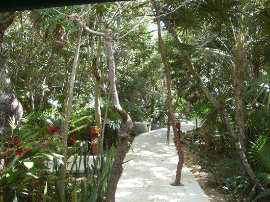 """Barcelo Maya Caribe: Wild alley """"Maya Beach"""""""