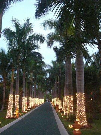 """Barcelo Maya Caribe: Palm avenue """"Maya caribe"""""""