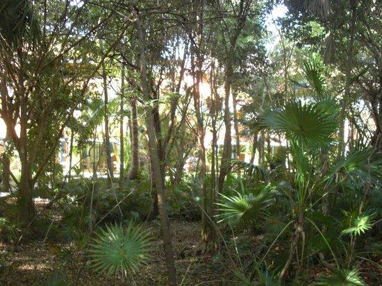 Barcelo Maya Caribe: Wild garden parts