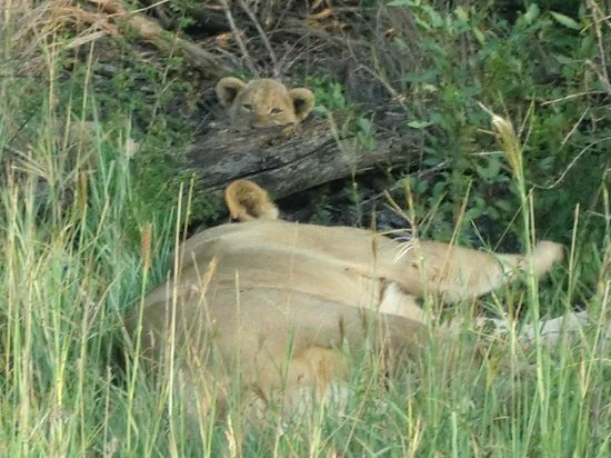 Rhulani Safari Lodge:                   Spot the cute cub in the background