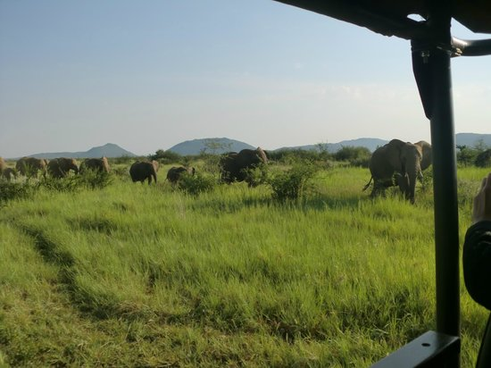 Rhulani Safari Lodge:                   Herd of elephants