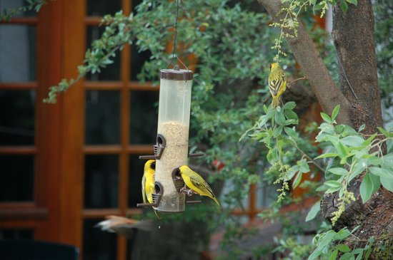 Rivonia Bed & Breakfast: Birds life abounds.