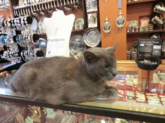 Bearskin Neck:                   cat in a shop