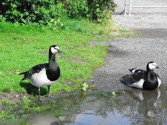 Djurgården:                   水鳥がたくさん