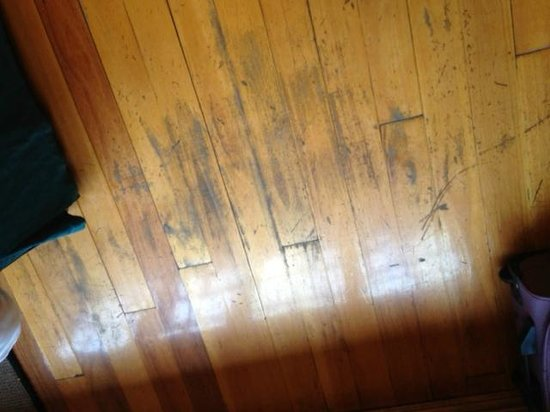 Lone Creek River Lodge:                   Scratched Floor