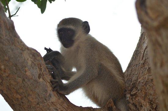 Safari Kenya Watamu - Day Tours:                                     molto simpatiche
