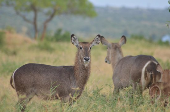 Safari Kenya Watamu - Day Tours 사진