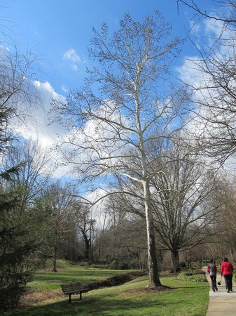 Tanger Family Bicentennial Garden : Odd looking tree in the park